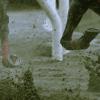 【エリザベス女王杯予想2015】週末の京都は雨模様?重馬場得意の馬4頭をピックアップ!