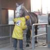 【エリザベス女王杯2015】出走予定馬の事前馬体重発表!